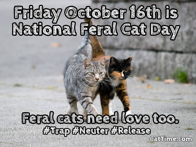 National Feral Cat Day Wishes Images download