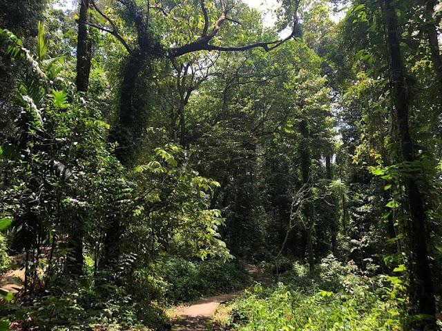 වනයක් මැද වැජබෙන - මීතිරිගල සේනාසනය 😇🙏 (Mitirigala Nissarana Vanaya) - Your Choice Way