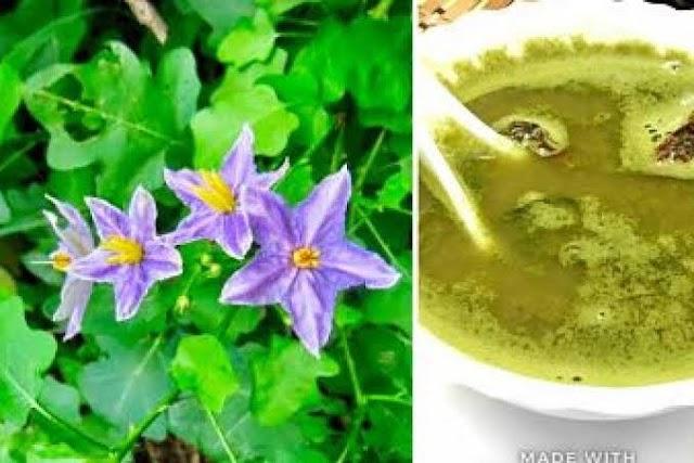 தூதுவளை சூப் செய்வது | Solanum Trilobatum Soup Recipe !