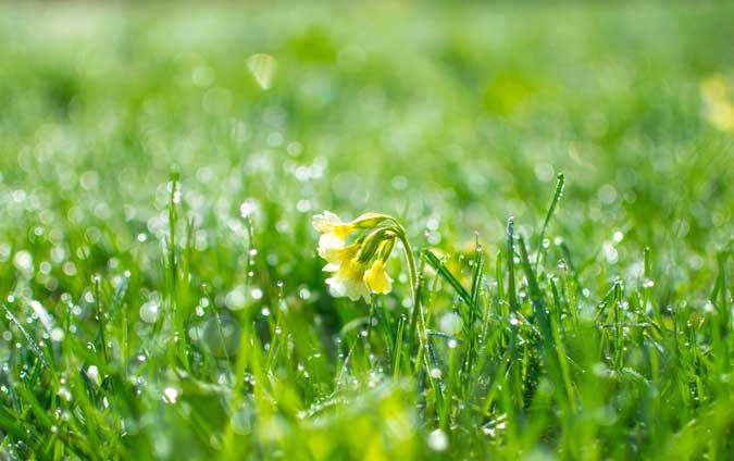 Yeşil renk çimen ilkbahar
