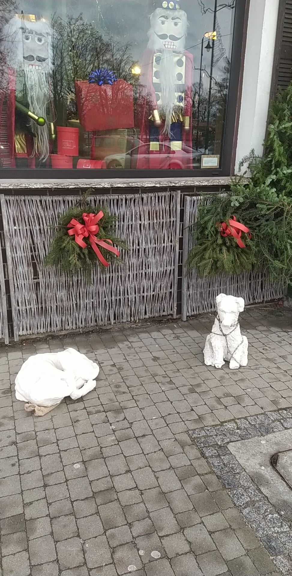 Ktoś bez serca ukradł karmę dla bezdomnych psów