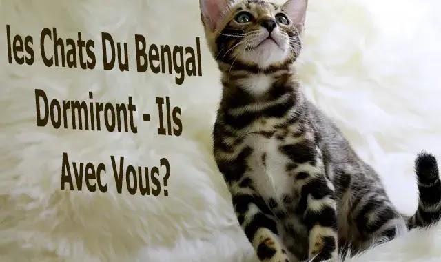 Les Chats Du Bengal Dormiront - Ils Avec Vous