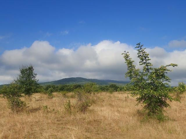 Sucha bułgarska łąka z widokiem na góry Strandża