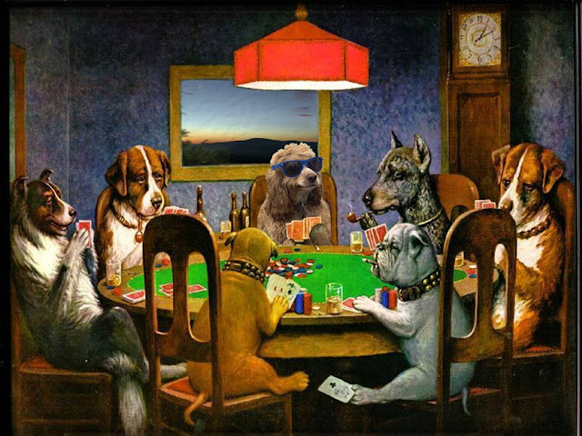 كلب,كلاب,سيدة ,بارد,انيق