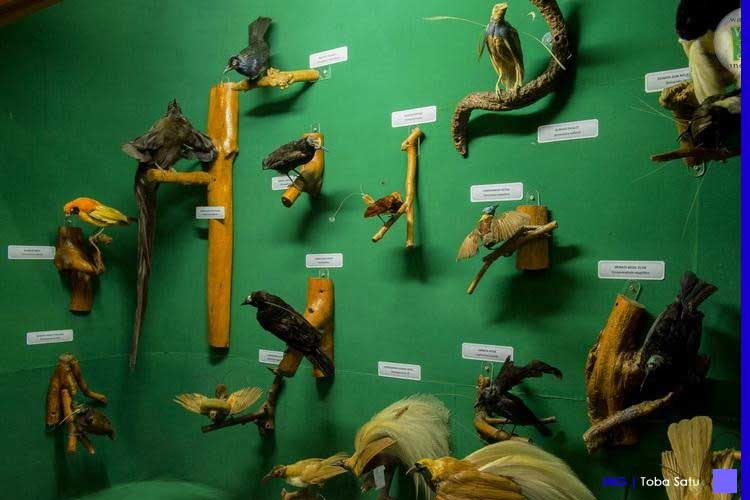 Museum Zoologi Bogor - Wisata Edukasi