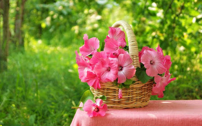 morning-with-pretty-pink-flowers