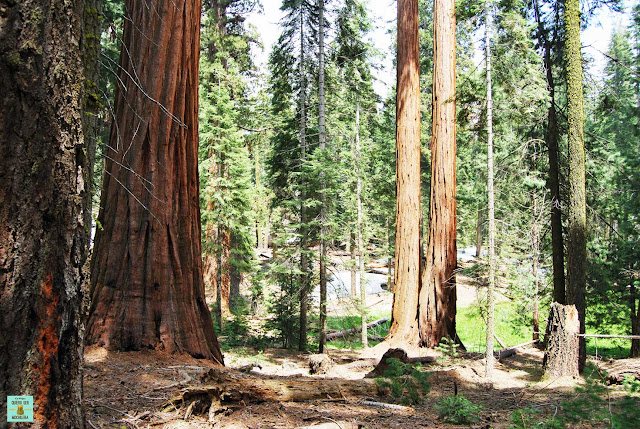 Sequoia National Park, Estados Unidos