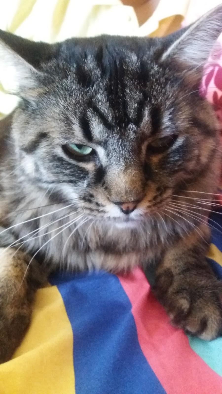 Seekor Kucing Yang Sangat Berdisiplin Miss Mirror