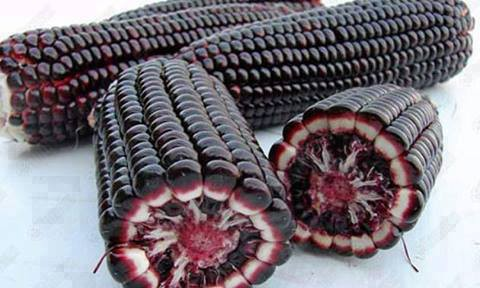 INITIATED DISEASE DIABETES, CANCUS CANCER, UNTIL DISEASE OFF ABLE TO BE DESTROYED WITH CORN PURPLE