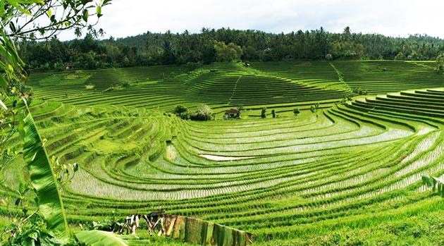 Prinsip-Prinsip Dasar dalam Pemilihan Sistem Pertanian