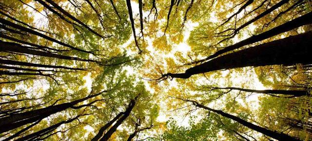 Mecanismos de defensa de las plantas y biologia
