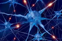 human brain, human brain and science