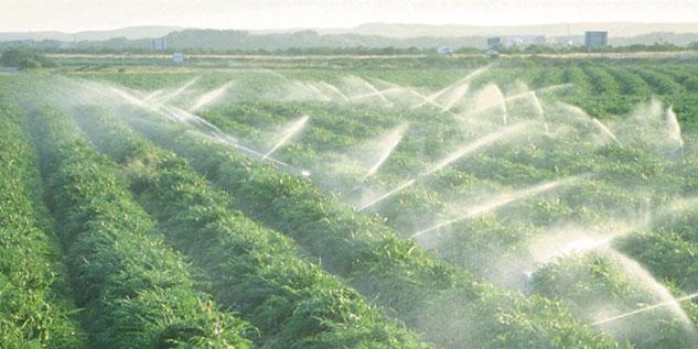 La pluie va permettre au Maroc d'obtenir une belle récolte agricole.