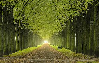 camino verde, soliloquio,