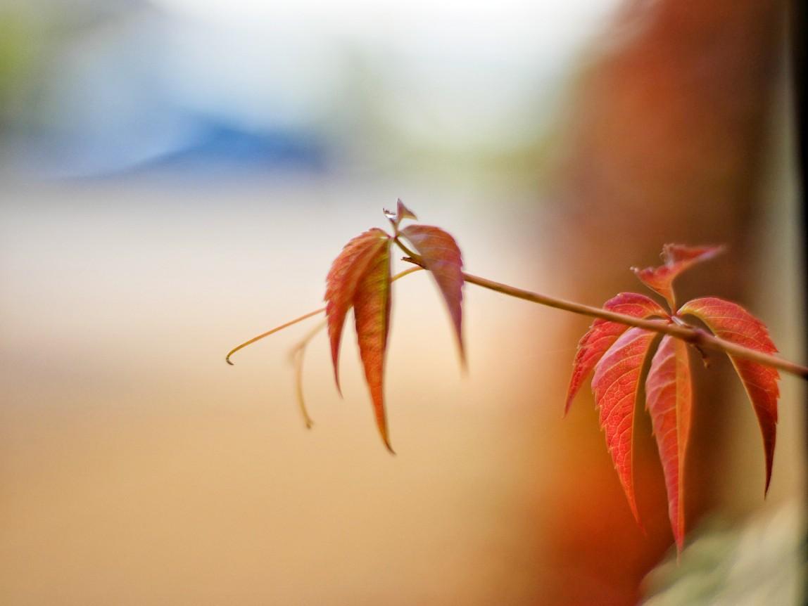 Herbstfarben, herbstschönheit,
