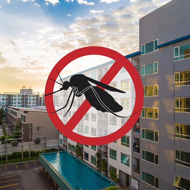 Durante pandemia, cuidados com focos de Aedes aegypti devem ser redobrados
