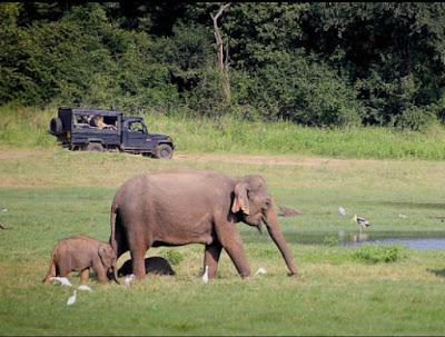 Kaundinya_Wildlife_Sanctuary,wildlife_sanctuary_in_andhra_pradesh