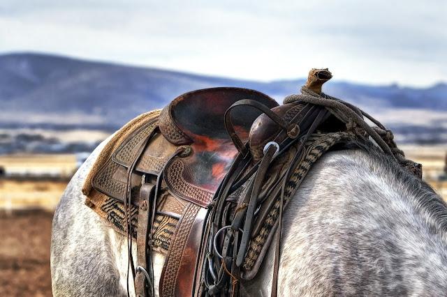 صور خيول جميلة للخلفيات
