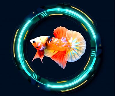 Nemo Form Chuẩn