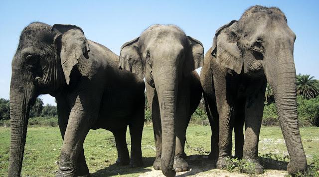අලි ඇතුන් පිළිබඳ හොඳම කරුණු 10ක් සමග විස්තරයක් ❤️✍️🐘 (A Description With 10 Best Facts About Elephants)