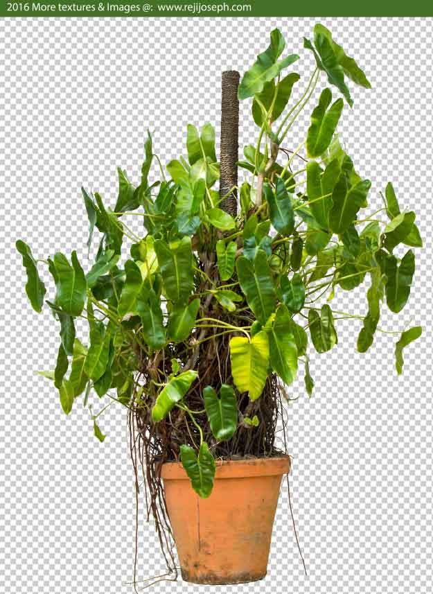 PNG Garden Plant Texture 00006
