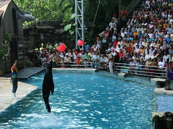 Show Sea Lion tại Safari World