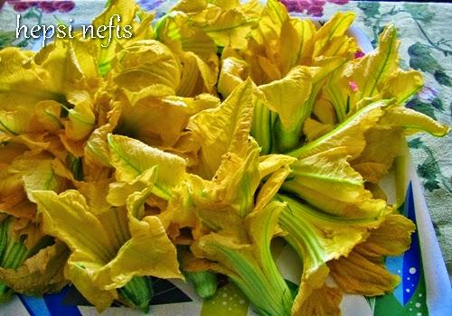 dolmalık kabak çiçeleri