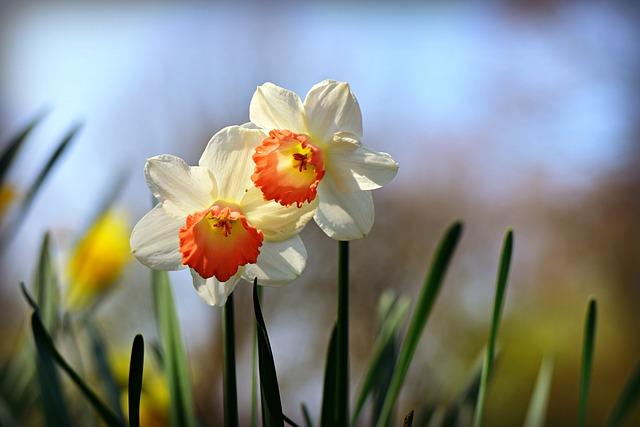 su tich hoa thuy tien