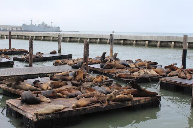 pier 39 - leoni marini