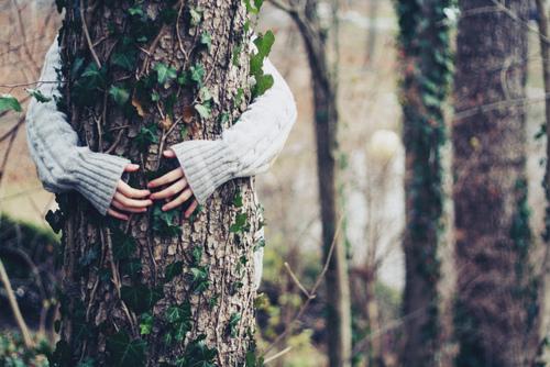 Lợi ích của việc ôm cây: Kết nối với sự chữa lành của thiên nhiên