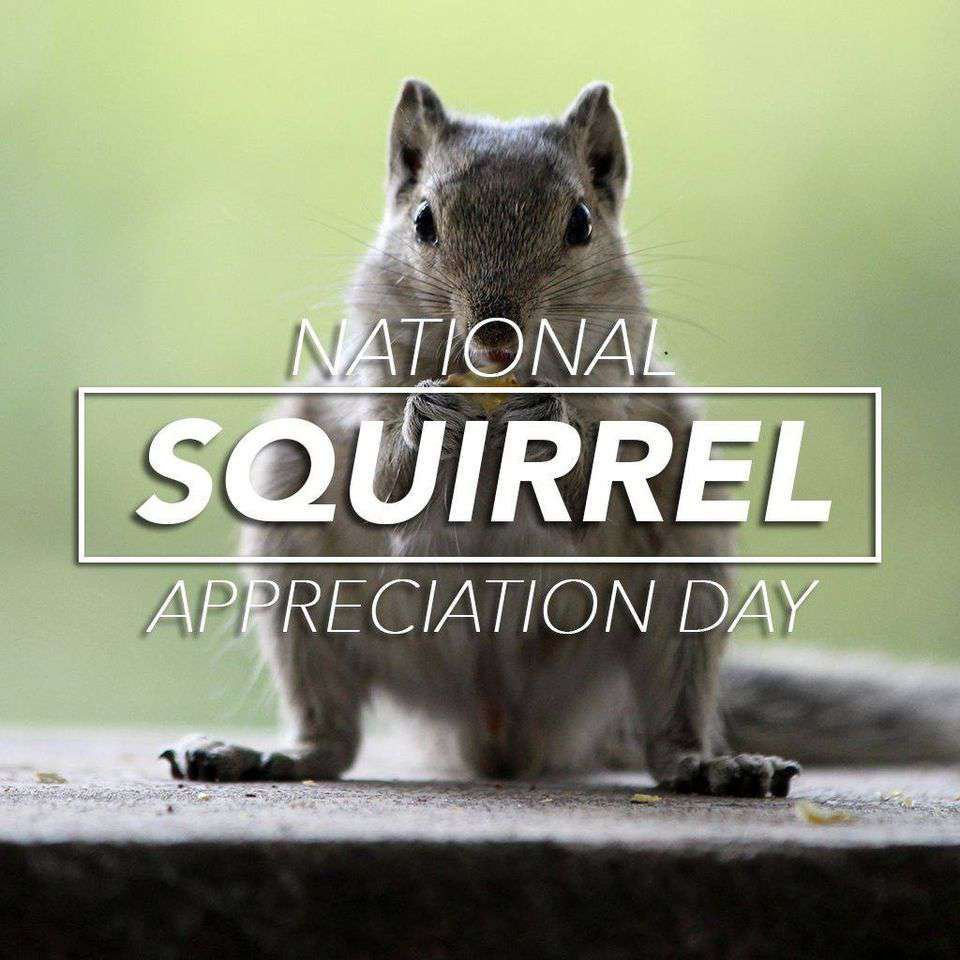 National Squirrel Appreciation Day Wishes Beautiful Image