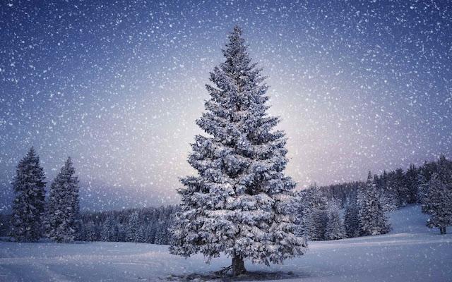 christmas tree wallpaper desktop