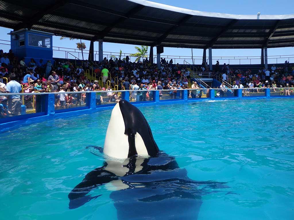 Miami Deniz Akvaryumu Hakkında Bilgi