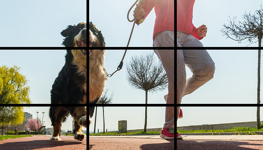 Example of a website photo using the rule of thirds