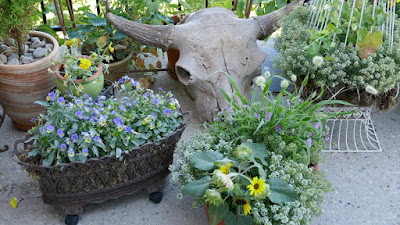 Medicine Hat, Alberta, wildlife, plants