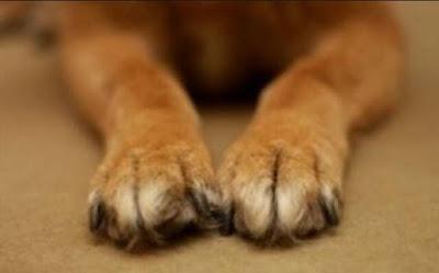 Αποτέλεσμα εικόνας για kainourgiopress σκυλιά