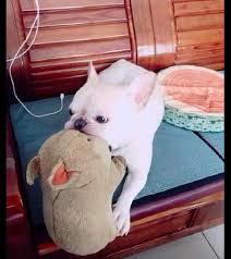brinquedo preferido dos cães