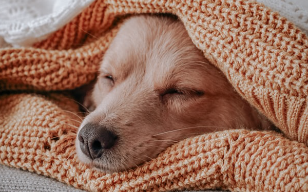 Snug As A Dog In A Rug