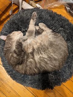 Widge in her new furry blue cat bed