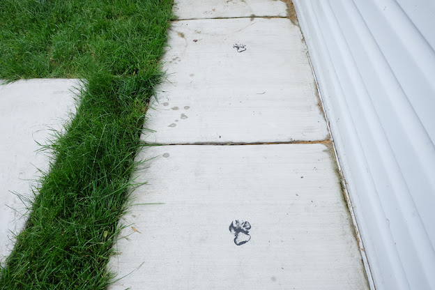 dog paw fence stain sidewalk