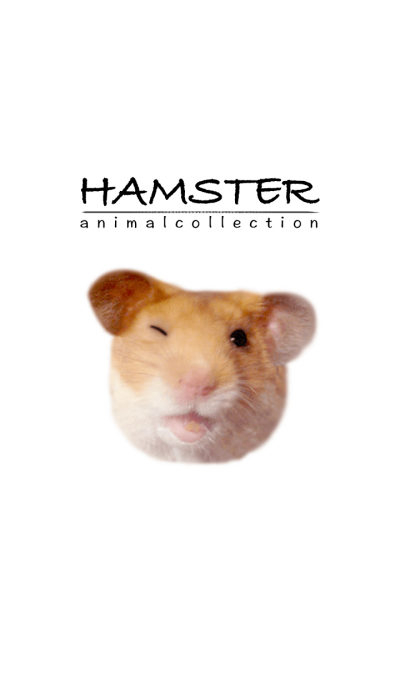 hamster-animal collection-