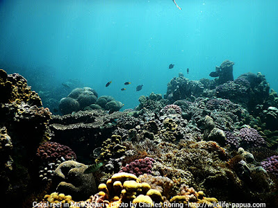 Affordable snorkeling tours with Charles Roring in West Papua