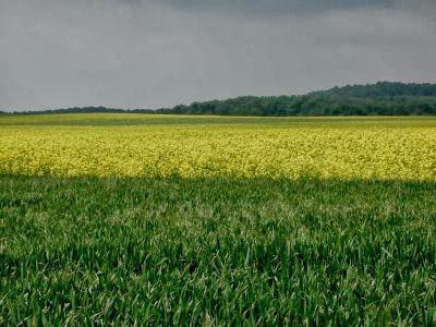 Economia agricola