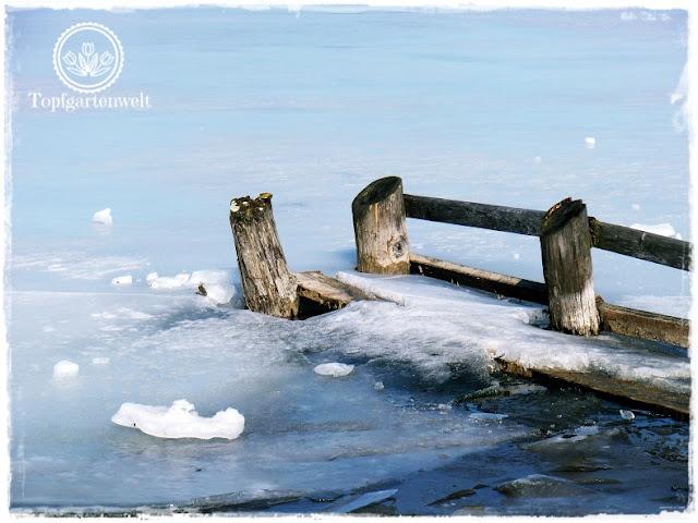 Gartenblog Topfgartenwelt Wallersee: vom Eis zerdrückte Wellenbrecher