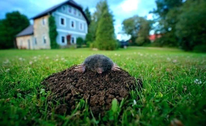 Pest Control,