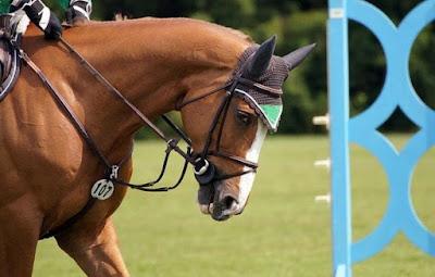 استبعاد,مدربة,ألمانية,من,الأولمبياد,بسبب,حصان