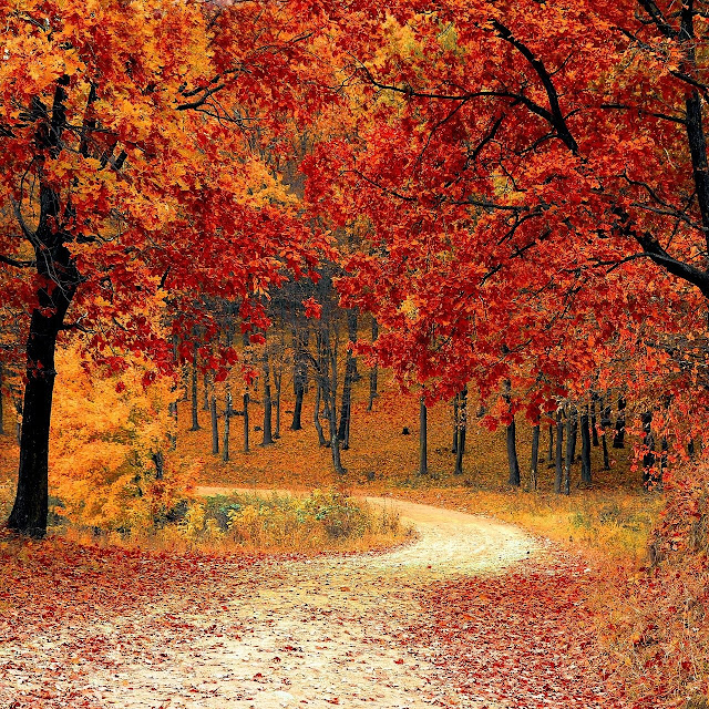 road through fall trees