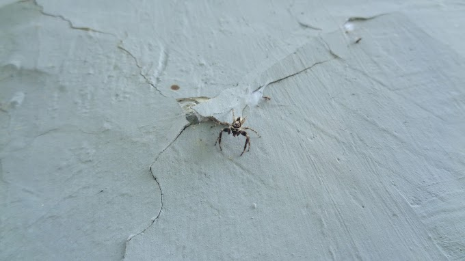 Laba-laba di dinding diam-diam merayap