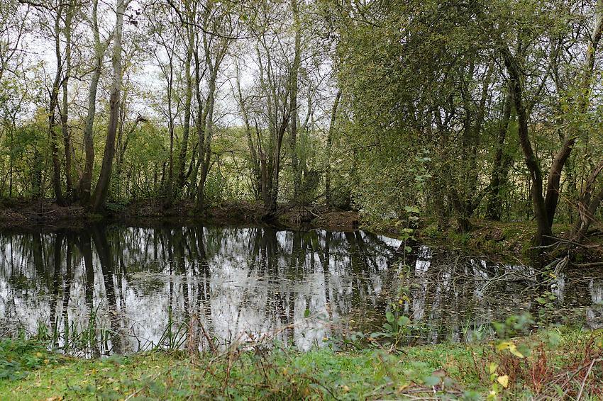 Les mares persistantes dans le marais de Gannedel