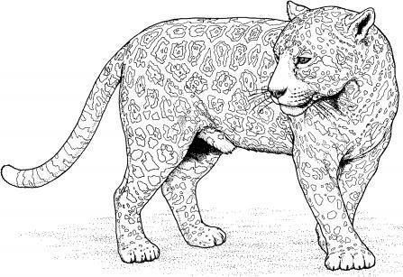 Colorear Leopardo Corriendo Dibujo | www.imagenesmy.com
